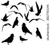 vector collection of bird... | Shutterstock .eps vector #382750144