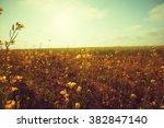field. vintage filter. | Shutterstock . vector #382847140