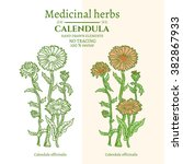 medical plants and herbs ... | Shutterstock .eps vector #382867933