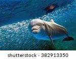 dolphin underwater on ocean... | Shutterstock . vector #382913350