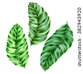 vintage style vector ficus palm ... | Shutterstock .eps vector #382943920
