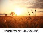sunset in europe in a wheat... | Shutterstock . vector #382958404