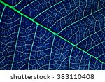Detail Of  Blue Flowers Leaf
