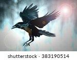 Bird   Flying Common Raven ...