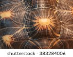 Stock photo shell turtle as a texture 383284006