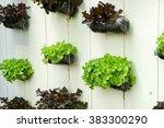 Vegetable In Decorated Vertica...