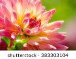 Dahlia Flower  Summer Scene ...