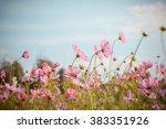 cosmos flower blossom in garden | Shutterstock . vector #383351926
