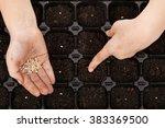 child hands putting tomato... | Shutterstock . vector #383369500