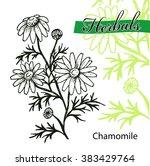 hand drawn chamomile... | Shutterstock .eps vector #383429764