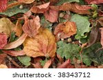 fallen autumn leaves in varying colors - stock photo