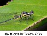 Macro Of Dragonfly Insect Clos...