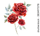 Stock photo watercolor drawing isolated red rose a rose branch with leaves botanical watercolor 383497378