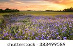 Sunset Over A Wild Flowers In...