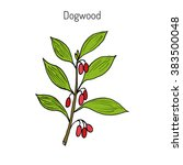 branch of   dogwood plant with... | Shutterstock .eps vector #383500048