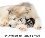 Stock photo puppy sleep with tiny kitten isolated on white background 383517406