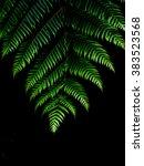 fern | Shutterstock . vector #383523568