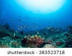 healthy reef at nusa penida.... | Shutterstock . vector #383523718