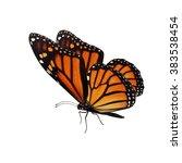 beautiful monarch butterfly... | Shutterstock . vector #383538454