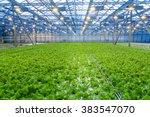 Cultivation Of Salad Inside Bi...