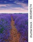 beautiful colors purple... | Shutterstock . vector #383589274
