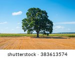 Harvested Field And One Big Tree