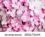 Pink Hydrangea Flower Soft And...
