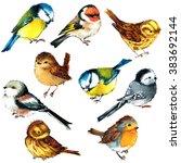 bird set watercolor... | Shutterstock . vector #383692144