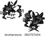 illustration with black lily... | Shutterstock .eps vector #383707654