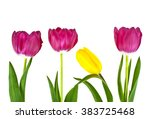 tulip flowers isolated on white ... | Shutterstock . vector #383725468