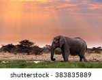 portrait of african elephants... | Shutterstock . vector #383835889