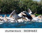 flock of  american great white... | Shutterstock . vector #38384683
