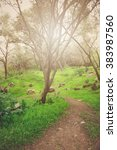 nature trail with retro style... | Shutterstock . vector #383987560