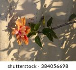 showy pink suffused with orange ... | Shutterstock . vector #384056698