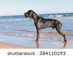 Great Danes Black Dog On The...