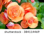 Numerous Bright Flowers Of...