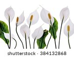 White Flowers Lilies Purity...