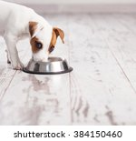 Stock photo puppy eating foot dog eats food from bowl 384150460