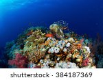 Coral Reef And Fishes In The...