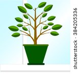 ficus tree in the pot on the... | Shutterstock .eps vector #384205336