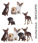Group Of Small Decorative Dog...