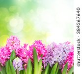 Stock photo pink and violet hyacinths in green garden 384267640