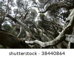 Swirly, twisted forest - stock photo