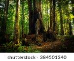 sequoia grove | Shutterstock . vector #384501340
