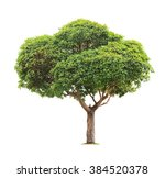 green beautiful  tree isolated... | Shutterstock . vector #384520378