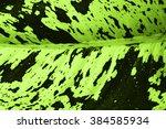 abstract textures | Shutterstock . vector #384585934