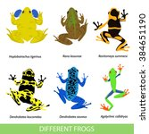 Set Of Different Frogs  Flat...