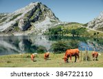 Idyllic Alpine Landscape  Brow...