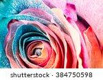 Rainbow Rose  Close Up  Macro.