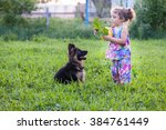 Stock photo little girl on the lawn is playing with the puppy 384761449